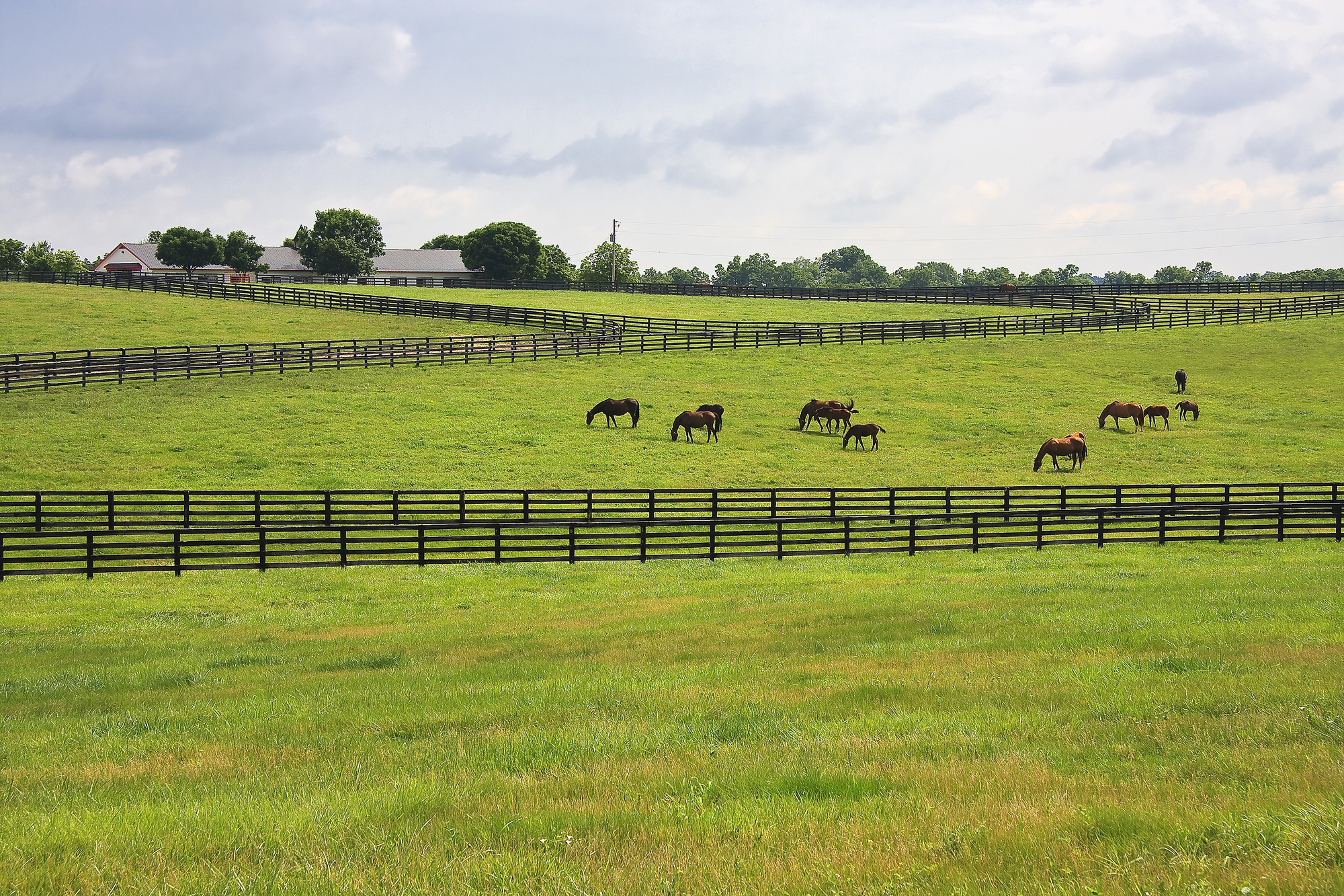 Touchstone Purcellville Horses 1